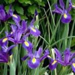 festival flower